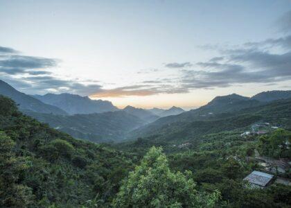 Una nuova foresta in Guatemala